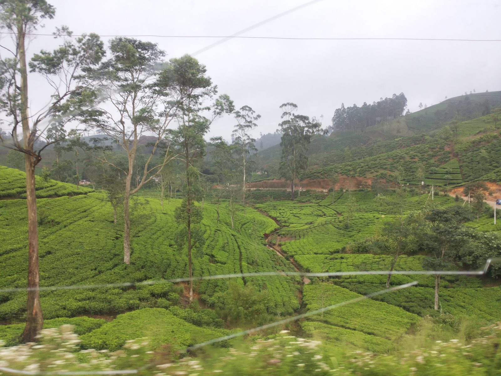 train in Sri Lanka, to Ella