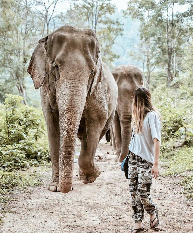 Travel Tip: Chiang Mai, Thailand