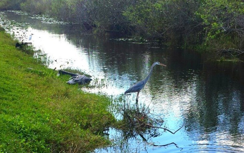 Everglades - one of the best things to do around Miami