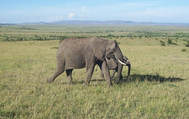Maasai Mara Kenya - an ultimate bucket list destination