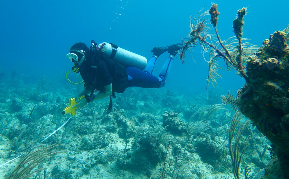 volunteer abroad: Bahamas coral reef conservation