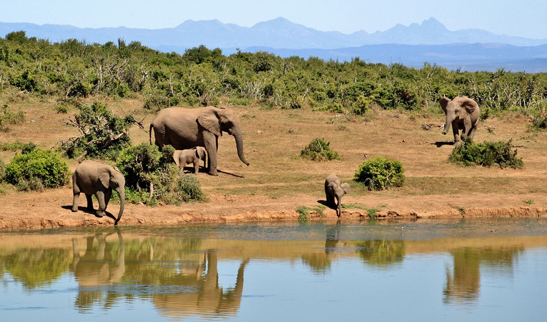 African safari: Top 3 experiences