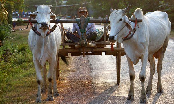 cambodia_expat_life