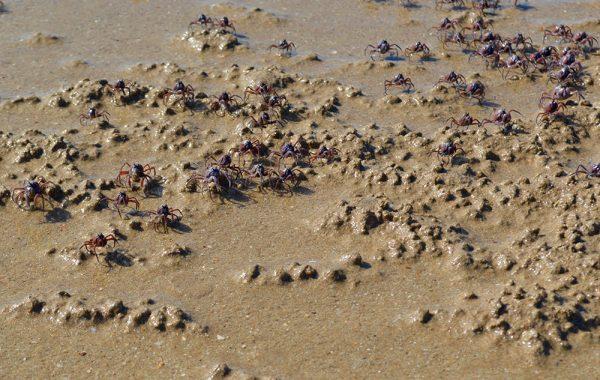 darwin_australia_best_beach