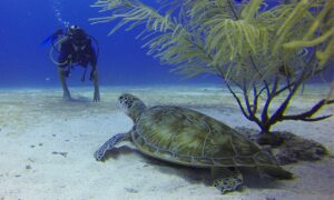 11 Of The Best Dive Sites in Bonaire – Caribbean