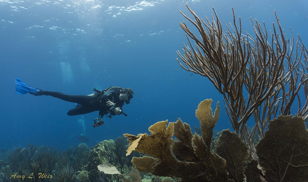 Best dive sites in Bonaire