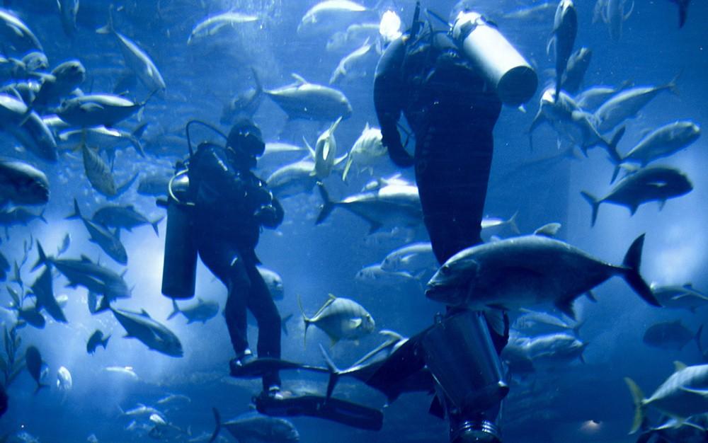 What to see in Dubai: Dubai Aquarium