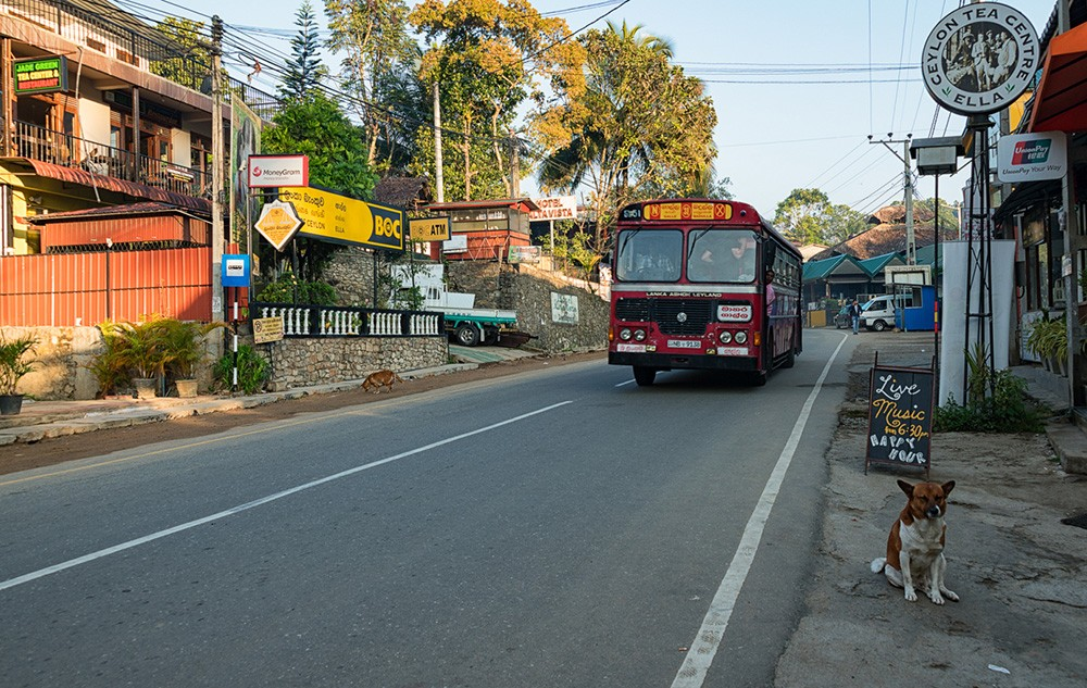 tips for driving in Sri Lanka