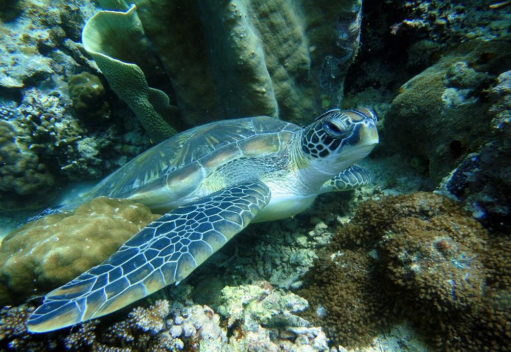 Best places for snorkeling in Palawan - Twin Peaks Reef