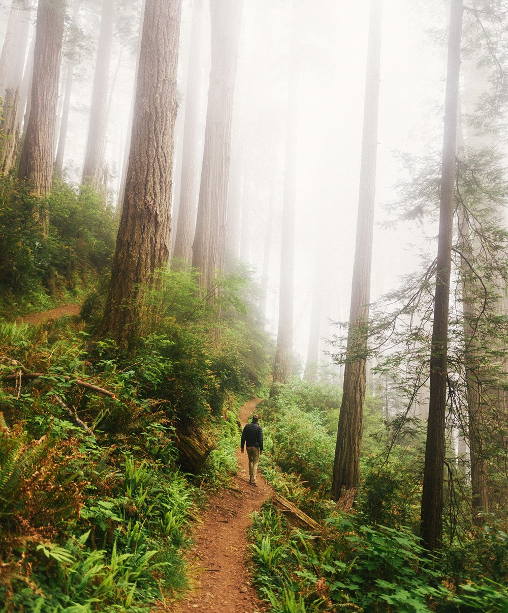 hiking in Redwood National Park