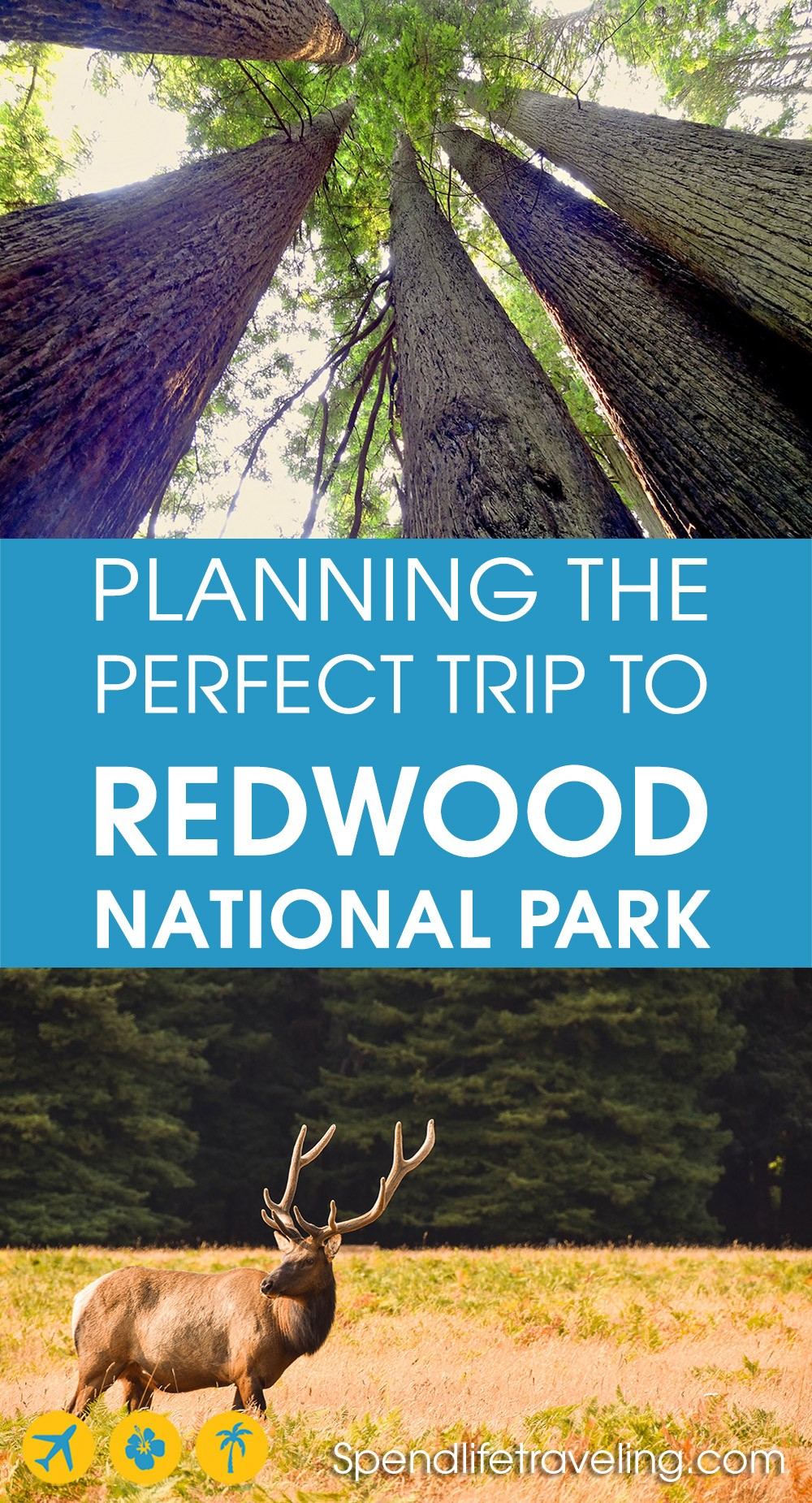 Visiting Redwood National Park, California? This complete guide will tell you everything you need to know. From Redwood National Park camping to things to do in Redwood National Park and the surrounding area.