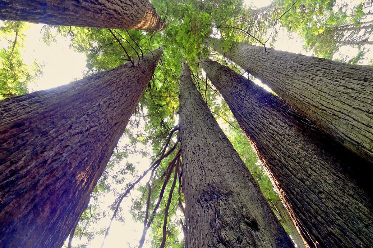 Visiting Redwood National Park? This is the Ultimate Guide to Plan Your Trip