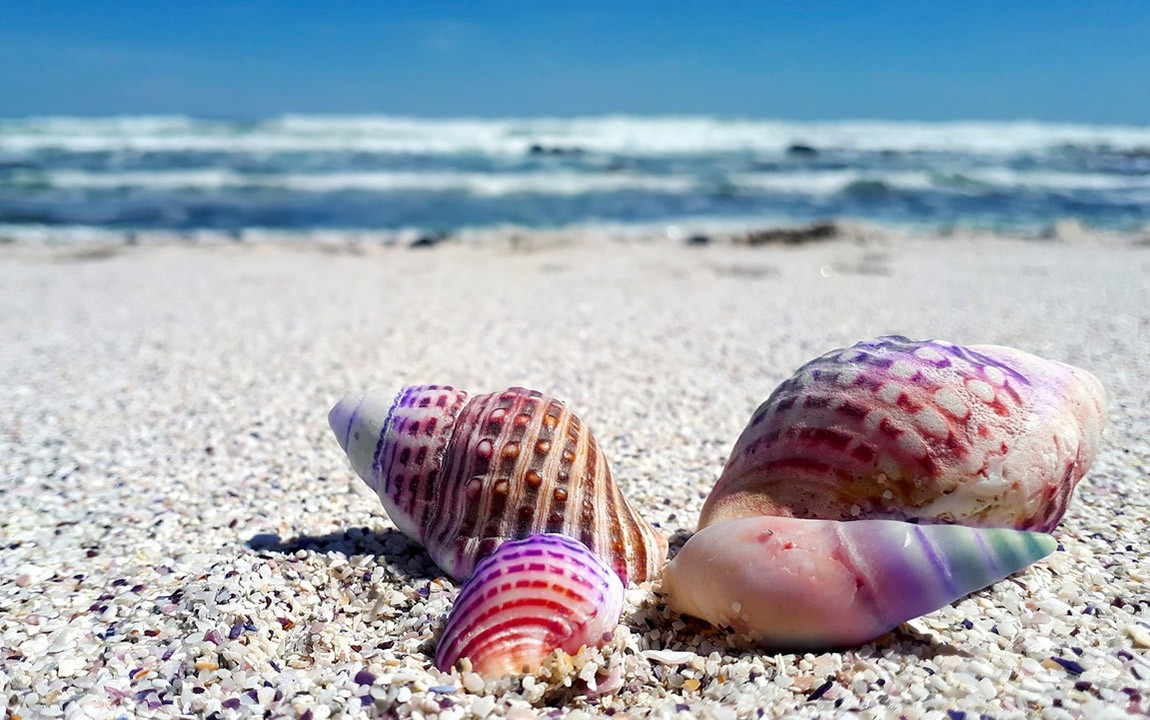 Why You Shouldn't Buy Seashells or Take Them From the Beach