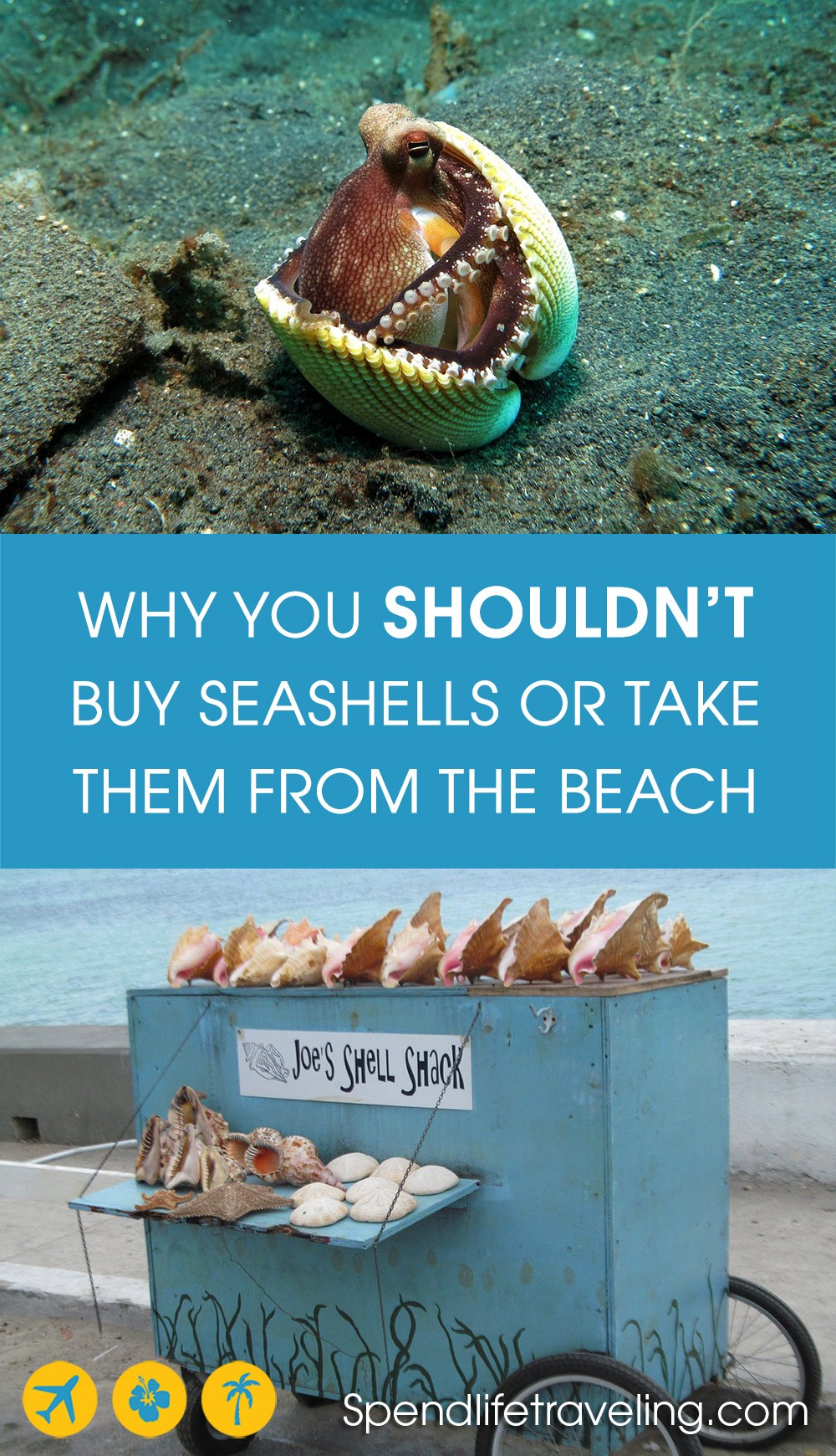 help save the oceans by not taking or buying seashells
